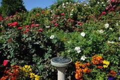 Rose garden landscaping Royalty Free Stock Image