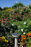 Rose garden landscaping Stock Photo