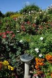 Rose garden landscaping Stock Photo