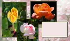 Rose garden layout Royalty Free Stock Images