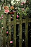 The rose garden for love Royalty Free Stock Photography