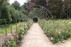 Rose Garden. Royalty Free Stock Photography