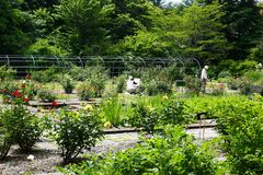 Rose Garden no jardim botânico da universidade do Hokkaido foto de stock royalty free