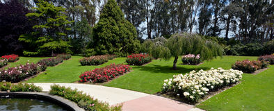 The Rose Garden of Palmerston North NZL Royalty Free Stock Images