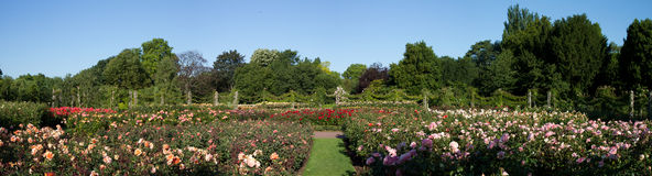 Rose Garden Panorama of the Regent's Park Stock Photos
