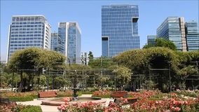 Rose garden at park in Chile. Rose  garden at a park in santiago, Chile stock video