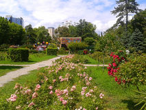 Rose Garden in the park Riviera, resort Sochi, Russia. Rose Garden in the park Riviera, beautiful blooming flowers, green lawns and trees, landscaping Stock Image