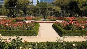 Rose garden at park in Chile. Rose  garden at a park in santiago, Chile stock video footage