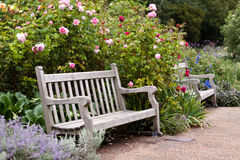 Rose garden in the park with wooden bench royalty free stock photo