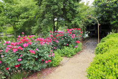 Rose Garden Path Stock Photo