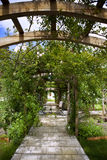 Rose garden and pergola. Rosebushes on a terrace in a park Royalty Free Stock Image