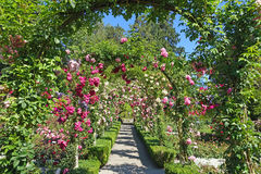Rose garden. Picture taken in the rose garden at Butchart gardens,Victoria,British Columbia,Canada Stock Photo