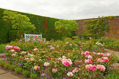 Rose garden. Royalty Free Stock Photography
