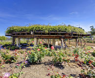Rose garden. San Diego. Rose garden in San Diego arcitectural builing structure Royalty Free Stock Image