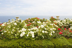 Rose garden on sea shore Stock Photo