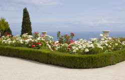 Rose garden on sea shore Stock Images