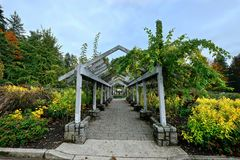 Rose garden in Stanley Park. Park in  Vancouver. British Columbia. Canada Royalty Free Stock Images