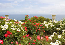 Rose garden with vases and sea Stock Photography