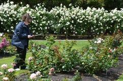Rose Garden von Palmerston Nord-NZL Stockfotos