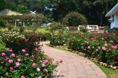 Rose garden. On the way in thailand Stock Photos