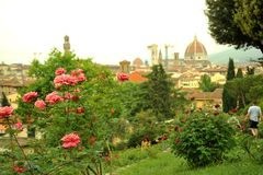 Rose gardens in Florence, Italy Royalty Free Stock Images