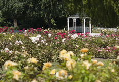 Rose Gardens Royalty Free Stock Photography