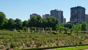 Rose-Garten Stockbilder