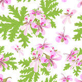 Rose Geranium theme. Seamless pattern vector collection of realistic fruits and slices. Stock Images