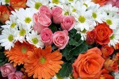 Rose gerbera daisy chrysanthemum Stock Image
