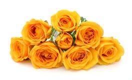Rose gialle nel fondo bianco Immagine Stock Libera da Diritti
