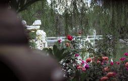 Rose in giardini cinesi fotografie stock