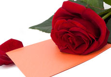 Rose and gift card Royalty Free Stock Image