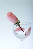Rose in glass Stock Image
