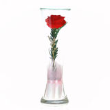 The rose in a glass Royalty Free Stock Photography