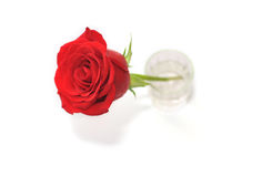 Rose in a glass. Red rose which is in a glass Stock Photo