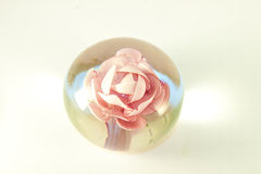 Rose in glass isolated Royalty Free Stock Photography