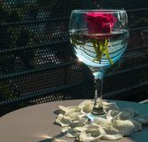 Rose in a glass royalty free stock photos