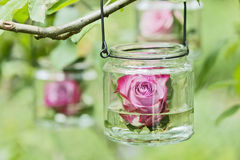 Rose in a glass. A single red rose swimming in a glass in a tree Royalty Free Stock Photography