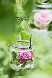 Rose in a glass Stock Photo