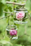 Rose in a glass Royalty Free Stock Images