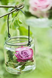 Rose in a glass Royalty Free Stock Photography