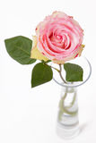 Rose in glass vase on white stock photos