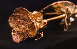 Rose Gold 24k. Real rose with stem and leaves covered with 24k gold on black background Royalty Free Stock Image