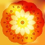 Rose gold sun petal flower shell on yellow Royalty Free Stock Photo