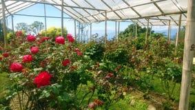 Rose Graden Royalty Free Stock Photos