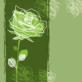 Rose on a green background Stock Image