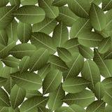 Rose Green Leaves sur le fond blanc Illustration de vecteur Illustration Stock