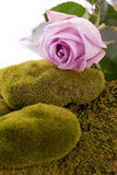 Rose and green  moss rock Royalty Free Stock Photo