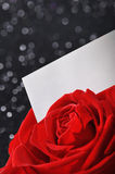 Rose with greeting card Royalty Free Stock Photos