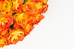 Rose greeting on white Stock Images